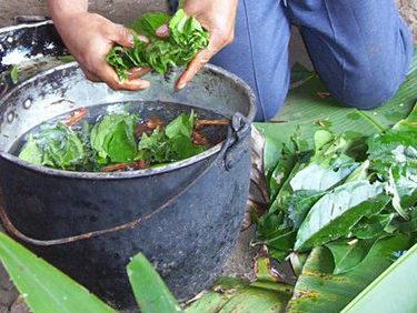 Ayahuasca and master plant dieta 16