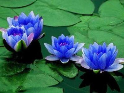 Sacred Plants 4
